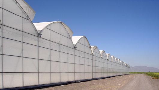 Invernadero multicapilla de techo curvo Gótico