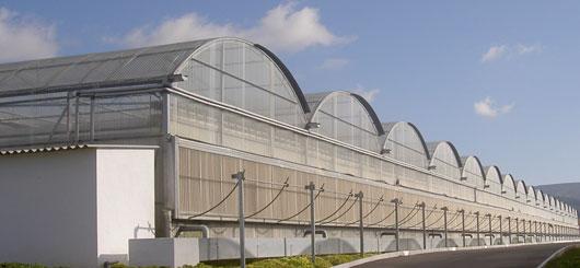 Invernaderos para cultivo de plantas ornamentales