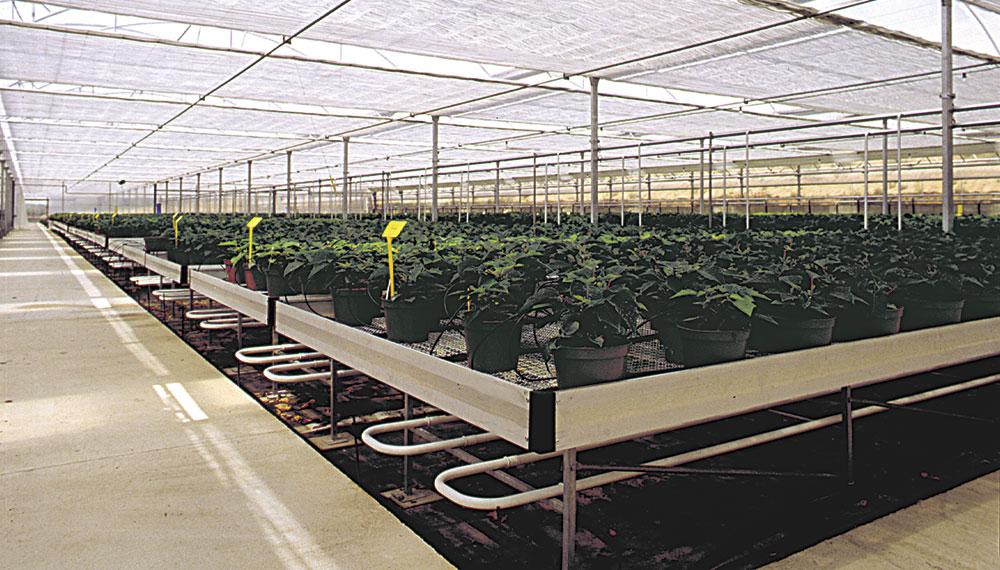 mesas de cultivo en invernadero