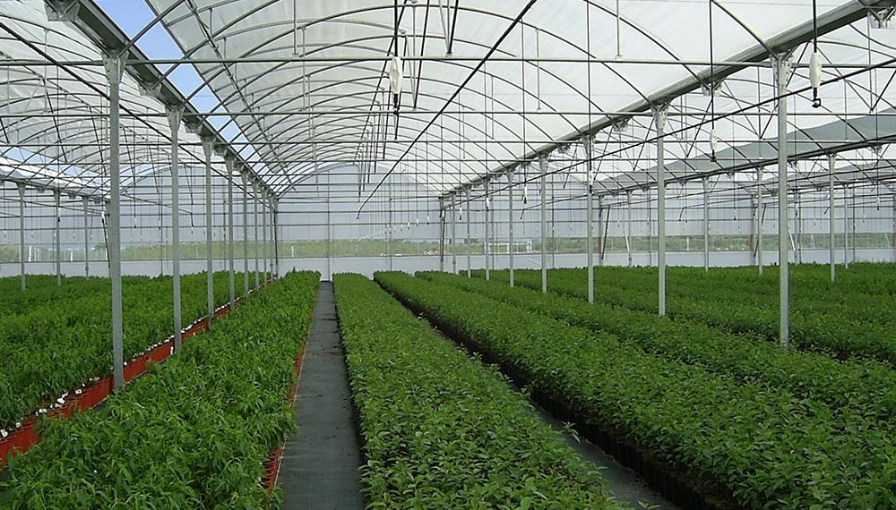 Invernadero multicapilla de techo curvo