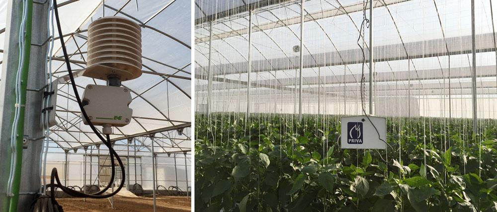 Detalle de sondas interiores en compartimentos de cultivo