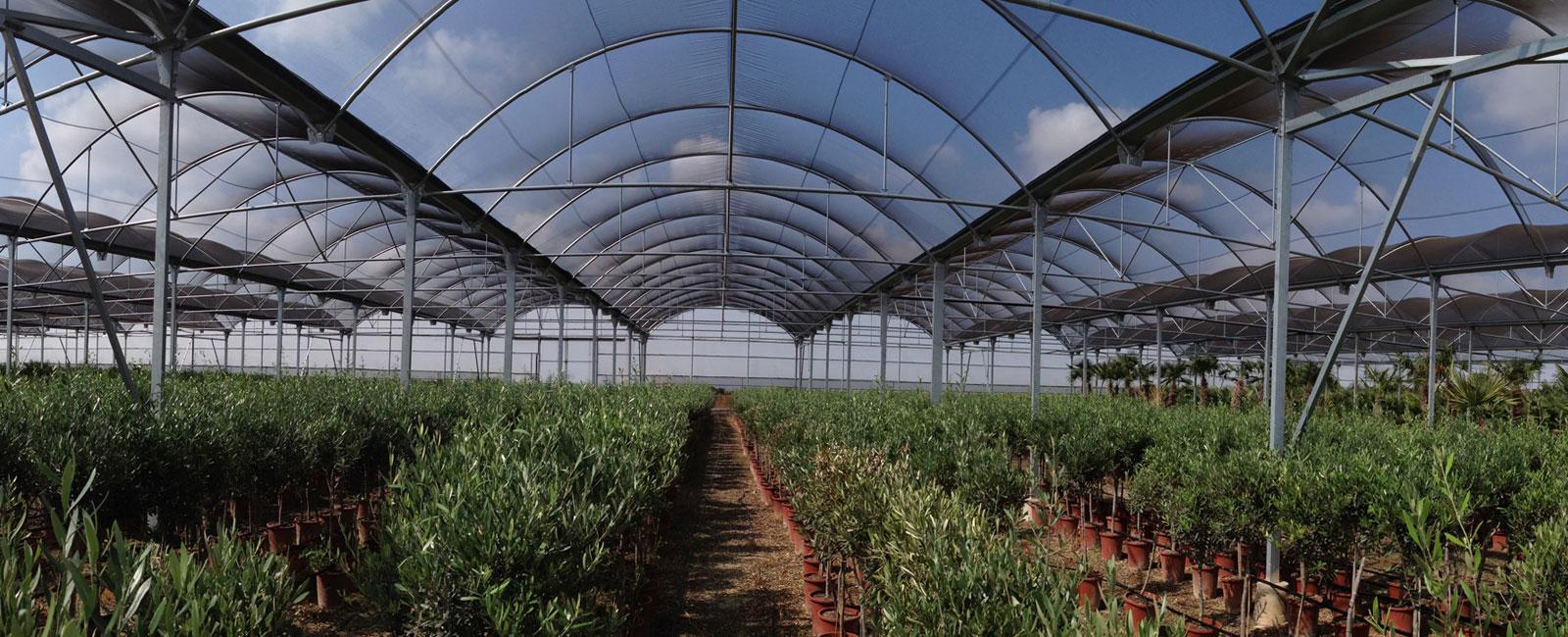 Umbráculos para cultivo