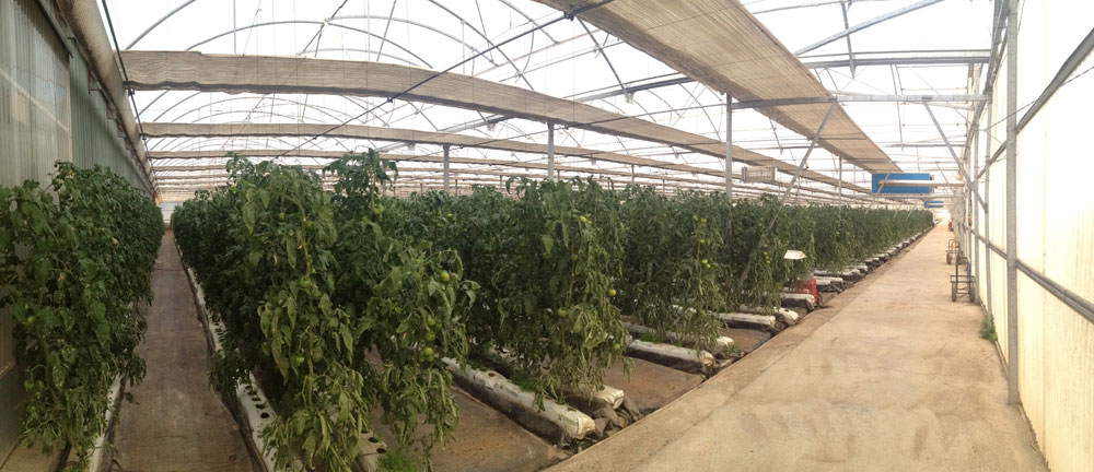 Inside view of ININSA high-tech greenhouse with screen system and air heating