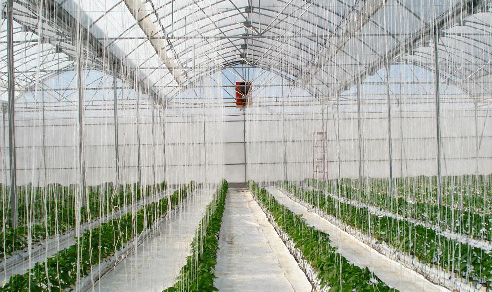 Invernadero modelo gótico con mejores prestaciones para sus cultivos