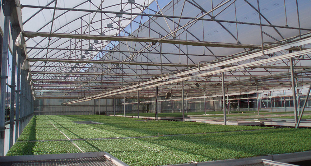 P-9'60 Gothic greenhouse with horticultural nursery crop