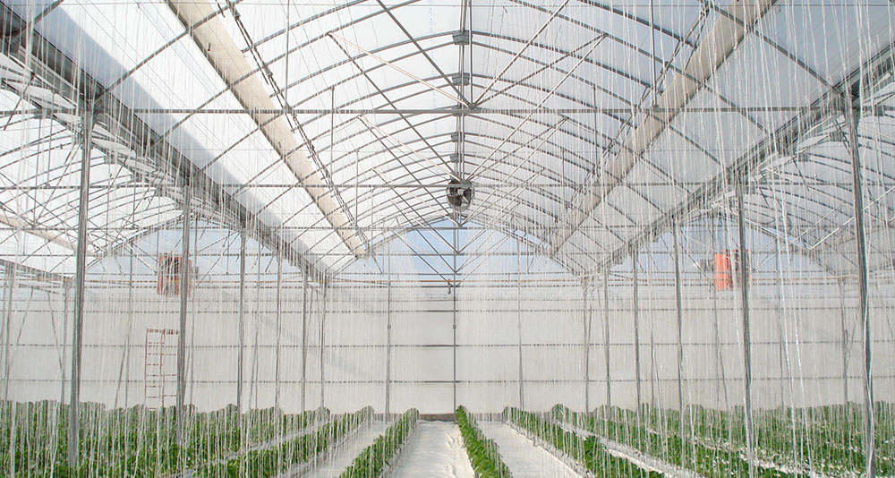 P-9'60 Gothic greenhouse with hydroponic pepper crop