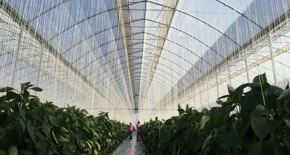 Vista interior de invernadero ININSA de alta tecnología