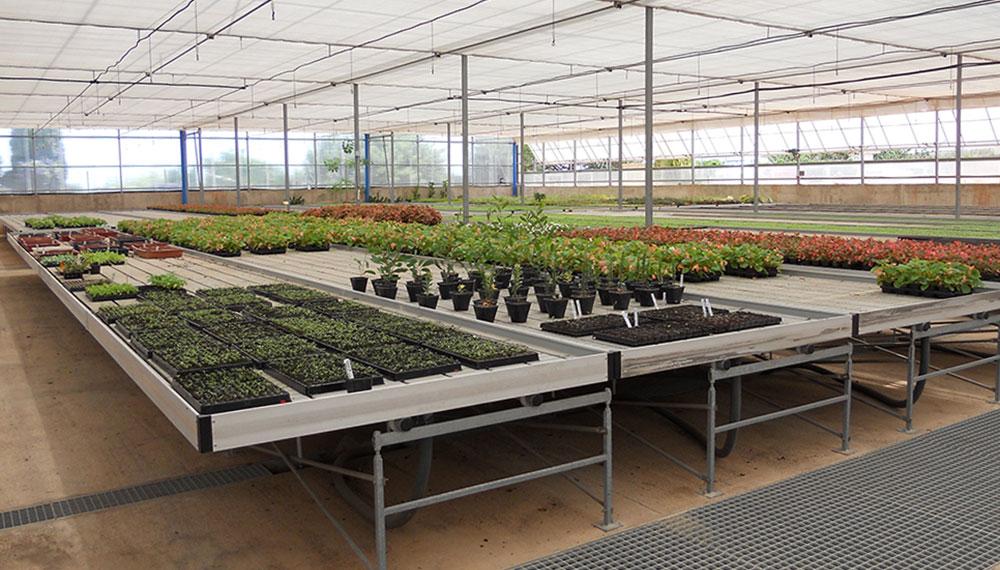 mesas de cultivo móviles para invernaderos