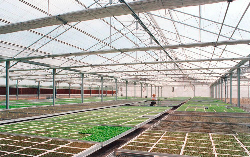 Interior de invernadero modelo PW para semillero