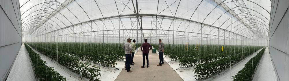 Indoor view of the G–12'80x3 greenhouse model